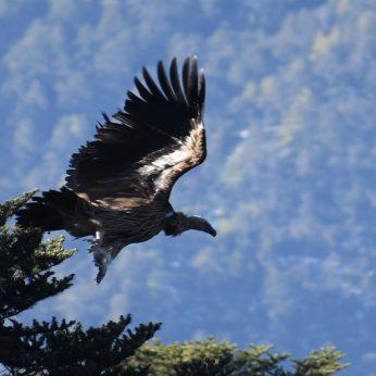 Heart Land Bhutan I | 9 Days